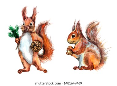 Watercolor standing squirrel with a cone and sitting squirrel with a nut. Celebratory New year illustration.