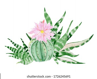 Watercolor succulent and cactus with pink flower.