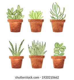Watercolor succulent houseplants set. Hand drawn summer illustration with potted plants isolated on white. Perfect for greeting card, invitation, logo, stickers and other.