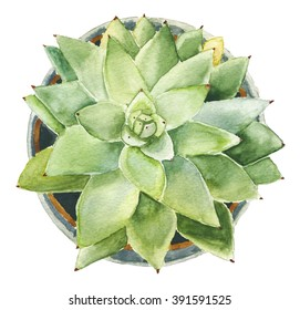 watercolor succulent in a pot / succulent in a pot / watercolor sketch succulent / succulent watercolor