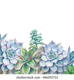 Watercolor succulents background. Hand painted green plants on white. Artistic floral card design