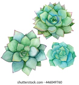 Watercolor succulents, decorative design elements set, floral illustration isolated on white background