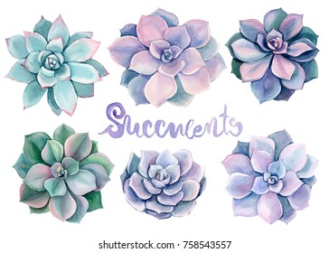 Watercolor succulents, Green and pink succulent bouquets, elements for invitations, greeting cards, covers and other items.