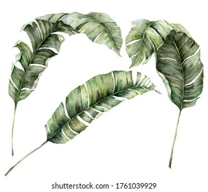 Watercolor summer big set with banana branches. Hand painted tropical palm leaves and twigs isolated on white background. Floral illustration for design, print or background.