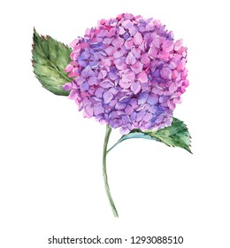 Watercolor summer pink hydrangea. Invitation greeting card. Natural floral illustration isolated on white background