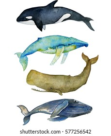watercolor summer set of whales, marine isolated set with humpback whale,killer whale,sperm whale on the white background