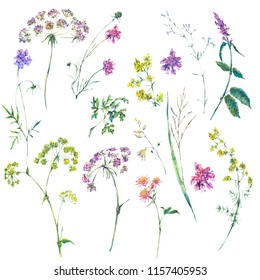 Watercolor summer set of wildflowers. Botanical design elements isolated on white background, natural flowers objects. Medicinal flowers collection