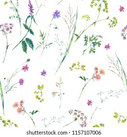 Watercolor summer wildflowers seamless pattern. Botanical illustration on white background, Colorful bouquet of medicinal flowers