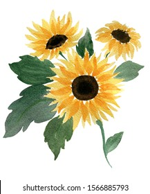 watercolor sunflower bouquet isolated on white background, watercolor floral design decoration