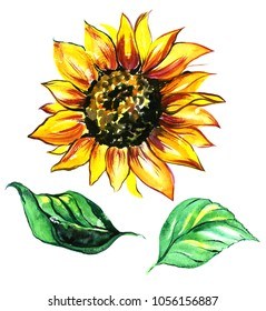 Watercolor sunflower  with green leaves