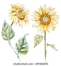 watercolor sunflower yellow flowers, isolated object, isolated objects watercolor fashion bright  flowers