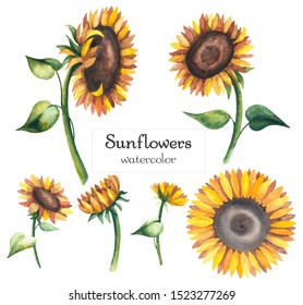 Watercolor sunflowers. Yellow flowers isolated on white background.