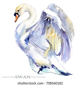watercolor swan bird illustration.