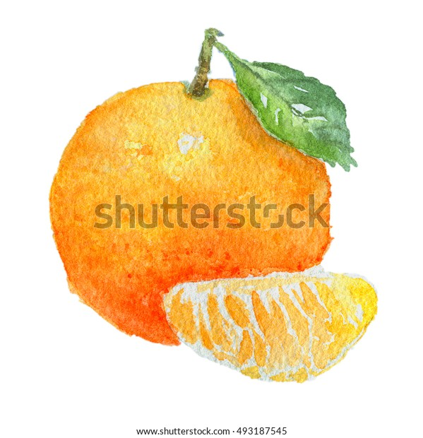 Watercolor tangerine with fruit stem, leaf and slice, isolated on white background