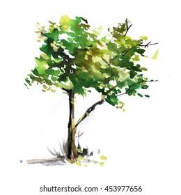 Watercolor tree background. Park, nature, outdoor. Hand drawn illustration sketch. Summer design for greeting cards, prints, travel sketchbook.