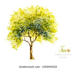 Watercolor tree. Watercolor botanical illustration. Nature. Deciduous Tree