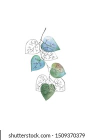 Watercolor tree branch with blue and skeleton leaves on white background. Hand drawn illustration for your design