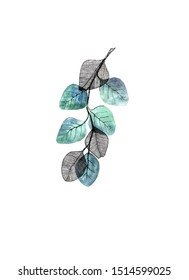 Watercolor tree branch with green-blue and skeleton leaves on white background. Hand drawn illustration