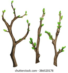 Watercolor tree branches, green buds, shoots set isolated on white background. Hand painting on paper