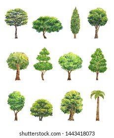 Watercolor trees, forest, pine, blue spruce, oak, landscape. In various embodiment's. The illustration is for another design. Isolated over white background.