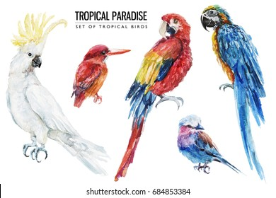 Watercolor tropical bird illustration set with macaw, parrot, cockatoo for wedding stationary, greetings, wallpapers, fashion, backgrounds, textures, DIY, wrappers, postcards, logo, etc.