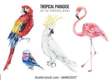 Watercolor tropical bird illustration set with macaw, parrot, flamingo, cockatoo for wedding stationary, greetings, wallpapers, fashion, backgrounds, textures, DIY, wrappers, postcards, logo, etc.