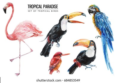 Watercolor tropical bird illustration set with macaw, parrot, toucan, flamingo for wedding stationary, greetings, wallpapers, fashion, backgrounds, textures, DIY, wrappers, postcards, logo, etc.