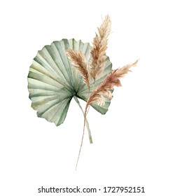 Watercolor tropical bouquet with dry leaves and pampas grass. Hand painted exotic composition with leaves isolated on white background. Floral illustration for design, print, fabric or background.