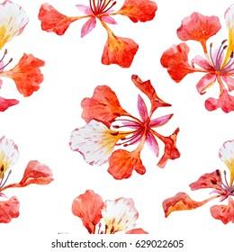 Watercolor Tropical flower pattern  Royal Poinciana. Delonix regia