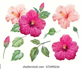 Watercolor tropical flower purple and delicate pink hibiscus with leaves and bud, Hawaiian flower composition. Set of isolated plant objects