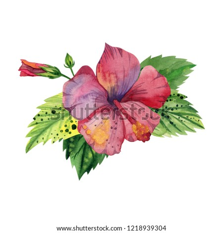 Royalty Free Stock Illustration Of Watercolor Tropical Flower Red