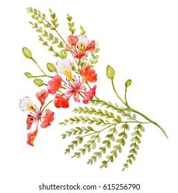 Watercolor Tropical flower  Tree branch Royal Poinciana. Delonix regia
