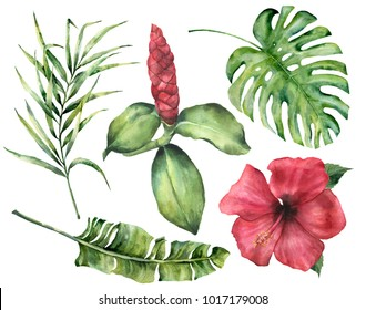 Watercolor tropical flowers and leaves. Hand painted monstera, coconut and banana palm branch, hibiscus, alpinia isolated on white background. Floral exotic illustration for design, print or fabric