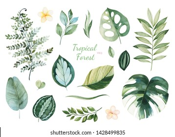Watercolor Tropical Forest set.Texture with green leaves,branches,palm leaf,flowers.Perfect for wedding,invitations,greeting cards,quotes,patterns,bouquets,logos,Birthday cards,your unique creation.