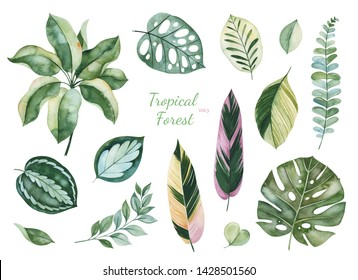 Watercolor Tropical Forest set.Texture with green leaves,branches,palm leaf.Perfect for wedding,invitations,greeting cards,quotes,patterns,bouquets,logos,Birthday cards,your unique creation.