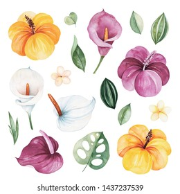 Watercolor Tropical Forest set.Texture with green leaves,hibiscus flowers,calla lily,frangipani and more.Perfect for wedding,invitations,greeting cards,quotes,patterns,bouquets,logos,Birthday cards.