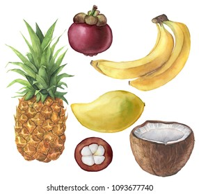 Watercolor tropical fruit and coconut set. Pineapple, coconut, banana, mangosteen, mango. Hand painted tropical fruits isolated on white background. For design or background. Food illustration