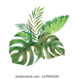 watercolor tropical green leaves, isolated on white background