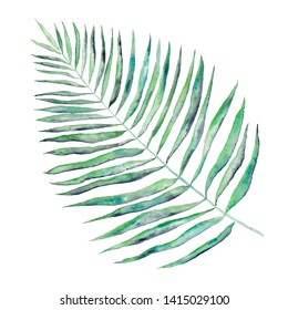 Watercolor tropical leaf. Jungle fresh green palm branch. Magnificent sammer tropical leaf isolated on white background. Watercolor exotic botanical illustration.