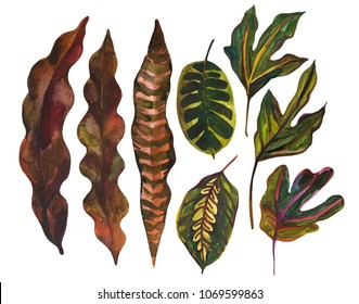 Watercolor tropical leaf set. Drawing of unusual leaves isolated on white background. Hand painted exotic leaves illustration.