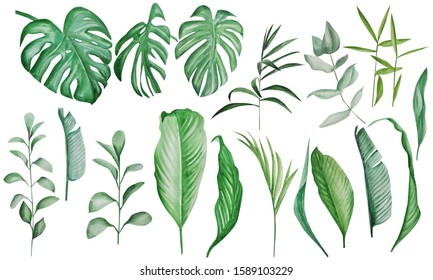 watercolor tropical leaves big set. Handmade illustration isolated on white background, can be used for decoration of printed materials, cards and for others. Tropical theme.