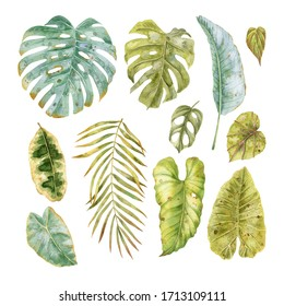 Watercolor tropical leaves collection. Set of tropical leaves: monstera, palm and banana leaves. Watercolor exotic greenery.