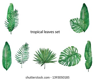 Watercolor tropical leaves green set