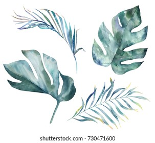 Watercolor tropical leaves on white background. Hand drawn set  illustration