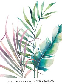 Watercolor tropical leaves poster. Hand painted exotic banana and palm green branches isolated on white background. Summer plants illustration