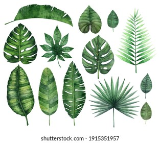 Watercolor tropical leaves set isolated on white background.  Jungle leaves and branches. Illustration for design of wedding invitations, greeting cards.