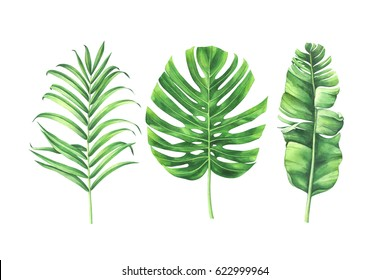 Watercolor tropical leaves set isolated on white background. Watercolor hand drawn illustration.