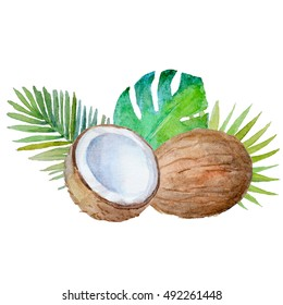 Watercolor tropical palm leaves with coconut on white.