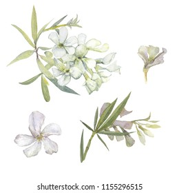 Watercolor tropical pattern of white oleander flowers, green leaves,floral elements isolated on white background.