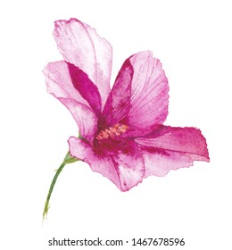 Watercolor tropical pink flower isolated on white. Purple hand drawn blossom branch. Colorful jungle illustration. Tropical watercolor summertime motif.